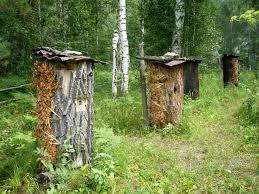 Бортевые пчелы