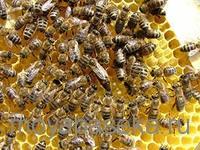 Что необходимо начинающему пчеловоду
