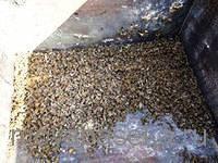 пчелиный подмор применение