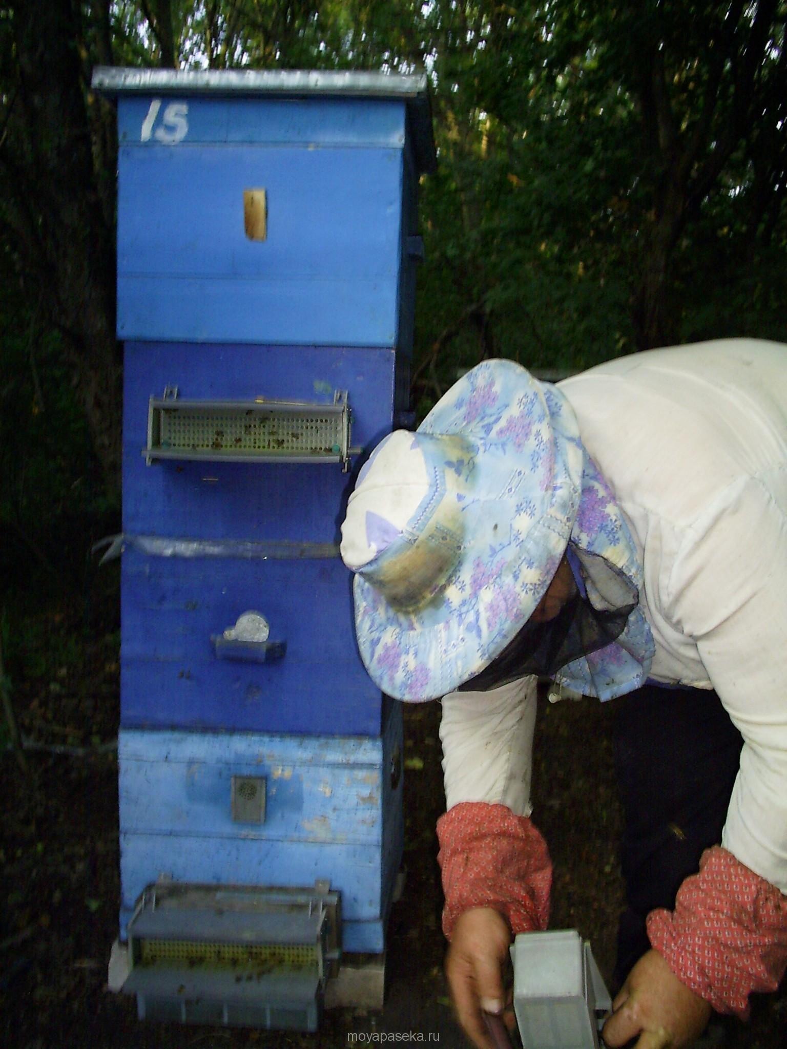 Десять главных правил пчеловода