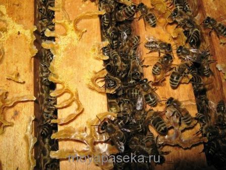 Воровство пчел - напад