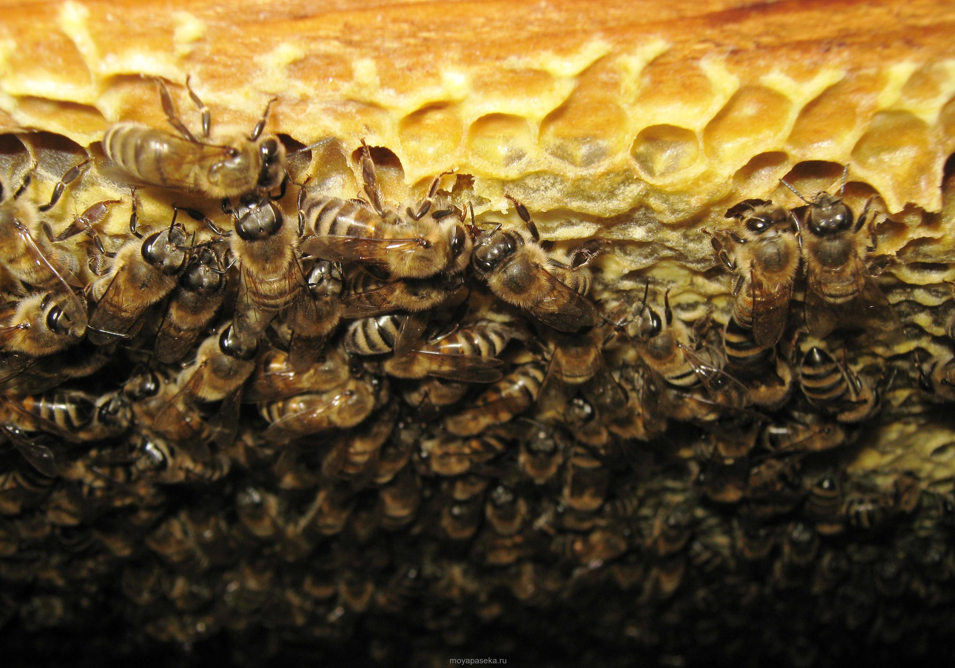 Выбраковка пчелиных семей