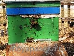 ранний облет пчел весной