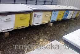 Выбор ульев и приобретение первых пчелосемей