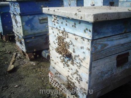 Весенние работы на пасеке. Важность раннего облета пчел и подкормки