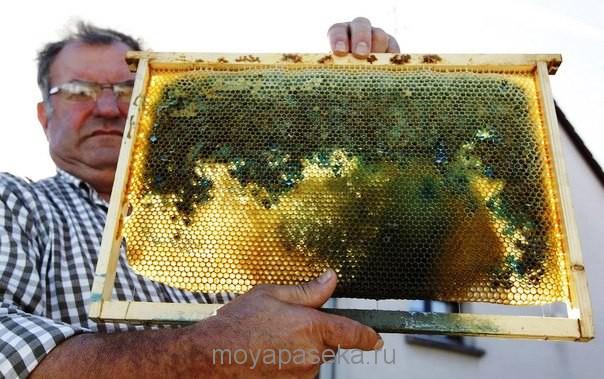 феномен во Франции - пчелы принеси синий мед