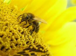 Пчела. опыление растений