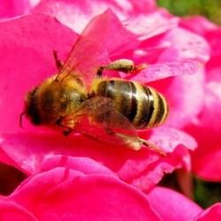 Мудрая пчела