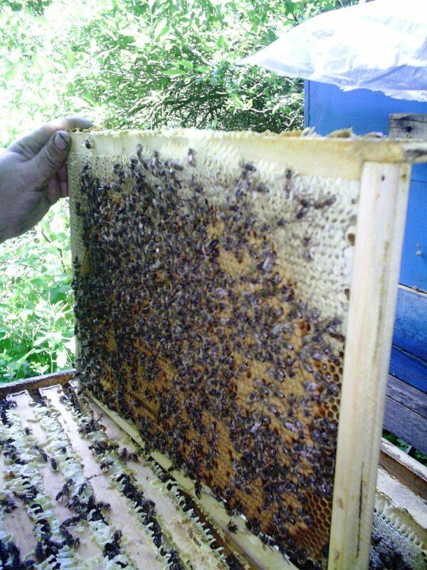 Пчелиный подмор и его применение