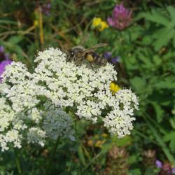 Пчелы и растения в жару