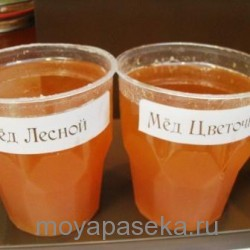 Лечение простатита. Мед и семена тыквы