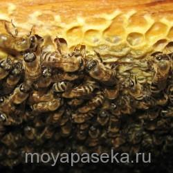 Приобретение пчелиной семьи.  Советы начинающим пчеловодам.