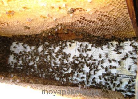 Очистка рамок от пчёл