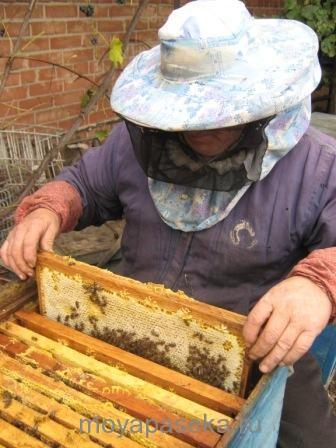 Учимся обращаться с пчёлами. Осмотр пчелиных семей