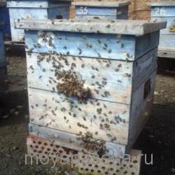 Пчелиная семья на улье