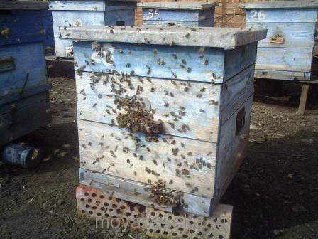 Ухаживаем за пчелиной семьей