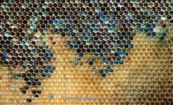 феномен во Франции - пчёлы принеси синий мёд