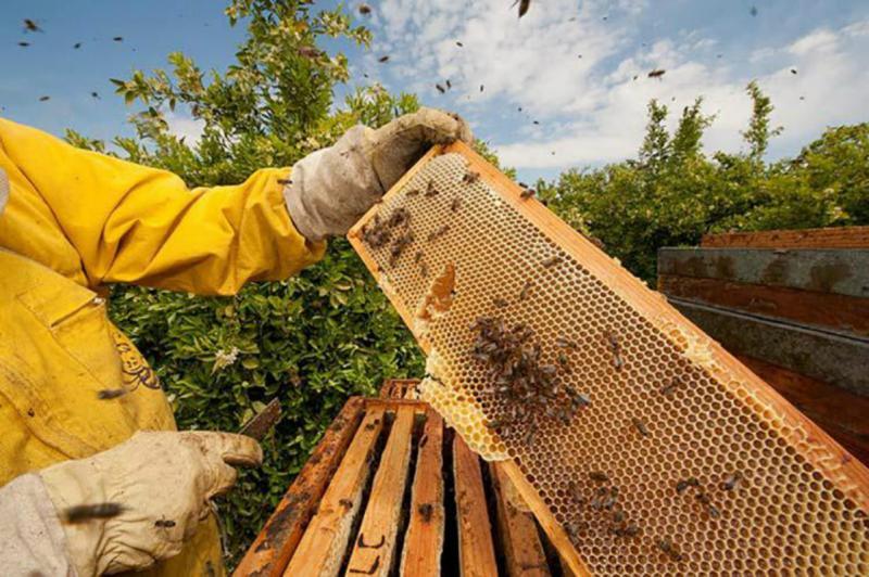 Разведение пчел как бизнес